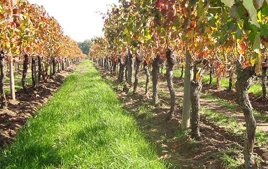 vigne saint emilion